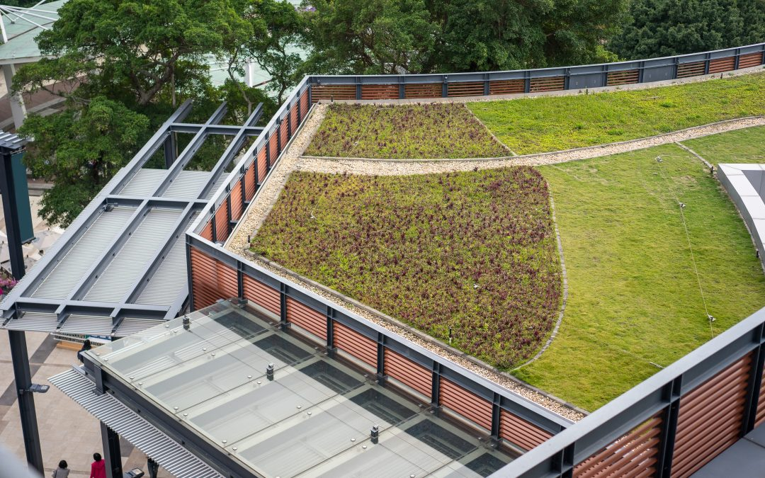 Монтаж зелених дахів